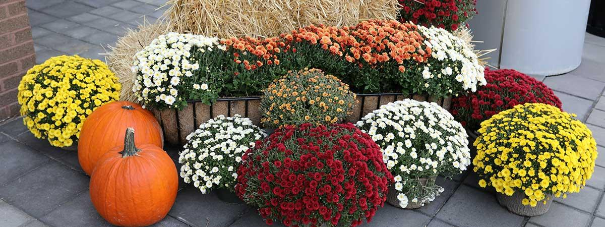 fall colored flowers and pumpkins