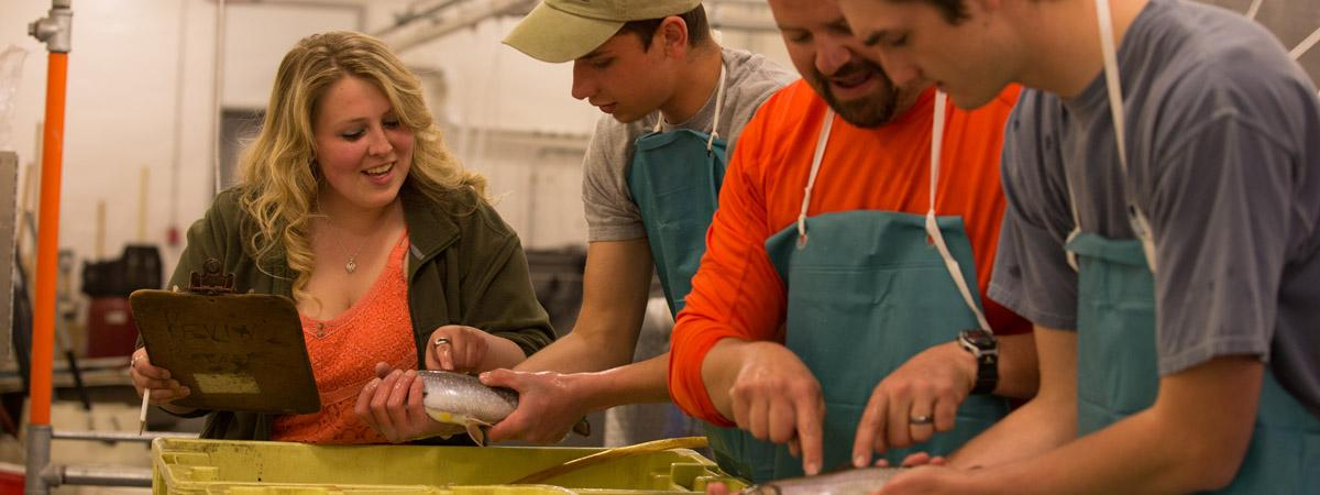 students working in the fish hatchery