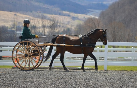 casey pulling carriage