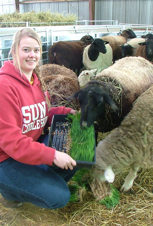 Plant Science student Kylie Smith attracts some attention and makes new friends with hydroponic oat fodder grown in the College greenhouses.