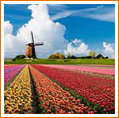 Horticulture in the Netherlands & Germany