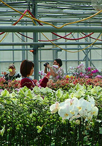 Students Tend to Flowers in Greenhouse